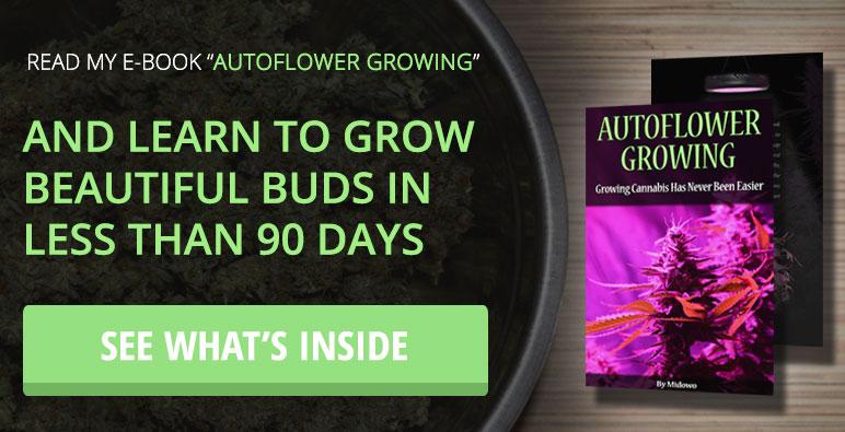 Autoflower Topping & FIMing - Autoflowering Cannabis Blog